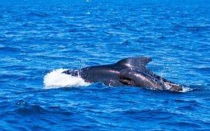 Orques De Tarifa Visite De L'andalousie En Van Aménagé