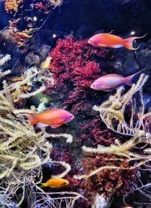 Aquarium Le Croisic Circuit De 6 Jours En Van Et Fourgon Aménagé Au Sud Bretagne