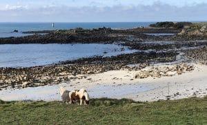 Batz Sur Mer En Van Aménagé Sentier Des Douaniers Roadtip Bretagne