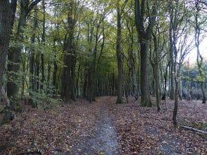 Forêt De Mormal En Van Aménagé Van Away Lille Hauts De France