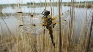 Réserve Ornithologique Du Teich En Van Amenage Van Away Bordeaux Location Vehicules De Loisirs