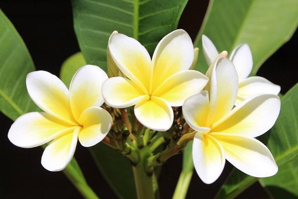 Circuit Van Amenage Spectacle De Danse Tahitienne Moorea