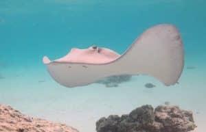 Tiahura Snorkeling Circuit 4 Jours En Van Ou Fourgon Amenage Moorea Polynesie Van Away
